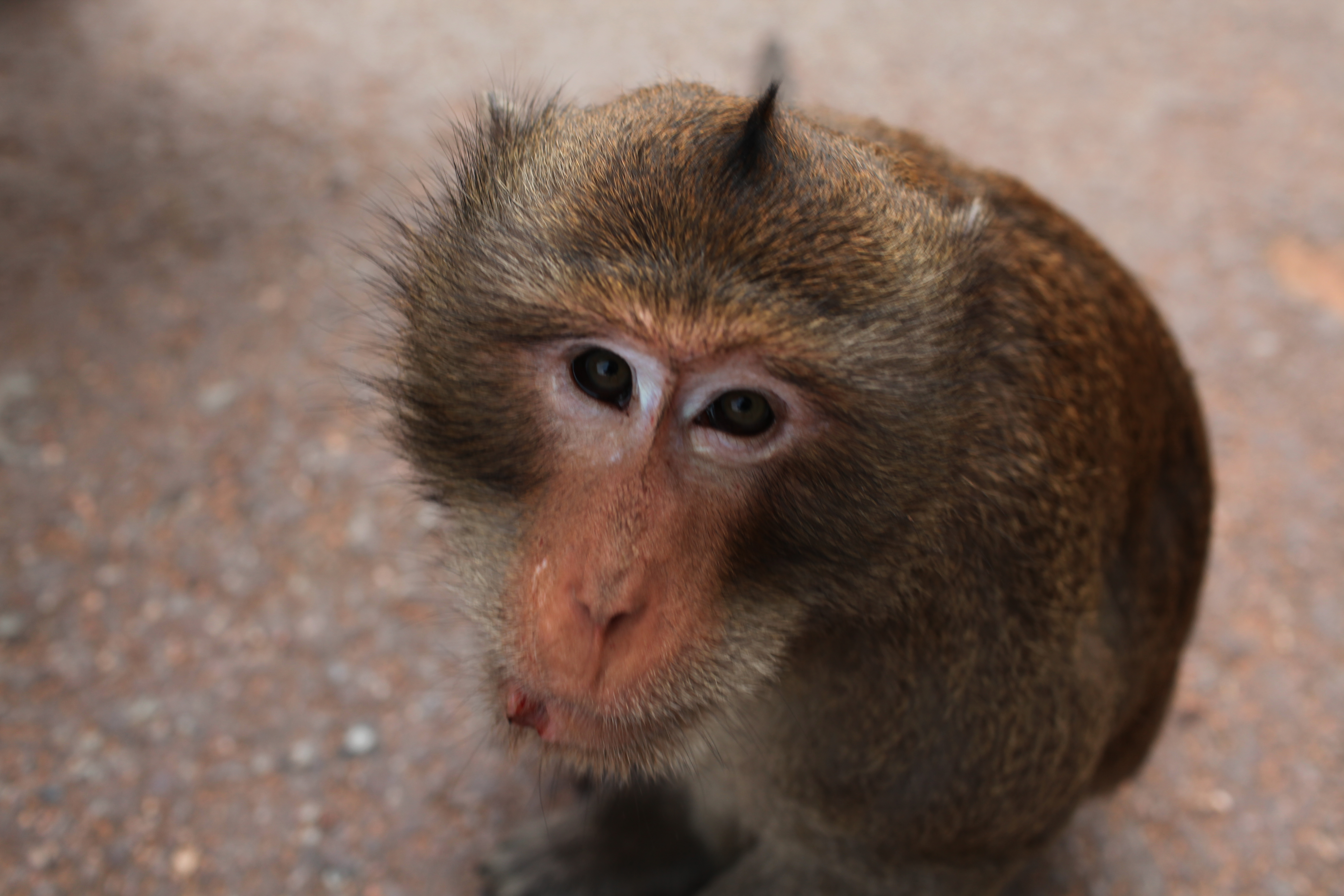 """wat to like abouta monkey Pet monkeys can be taught not to bite monkeys cannot be trained to """"behave"""" teaching a monkey not to bite is like teaching a monkey not to breath teaching a monkey not to bite is like teaching a monkey not to breath."""